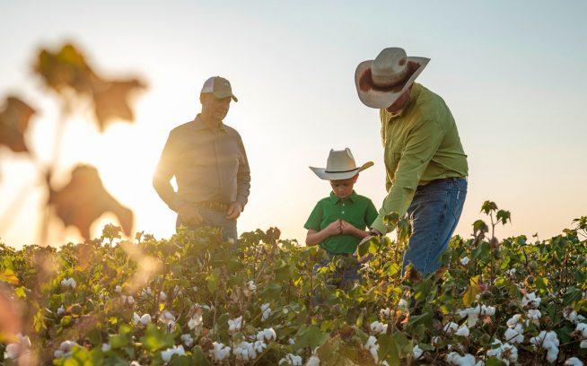 テキサス州西部の3世代の農家:ジェリー、アーロンとローガン・ボルジャー。3人はラメサの近くの300エーカーの土地でオーガニックコットンとピーナッツを育てながら暮らしている。Photo:Giles Clement