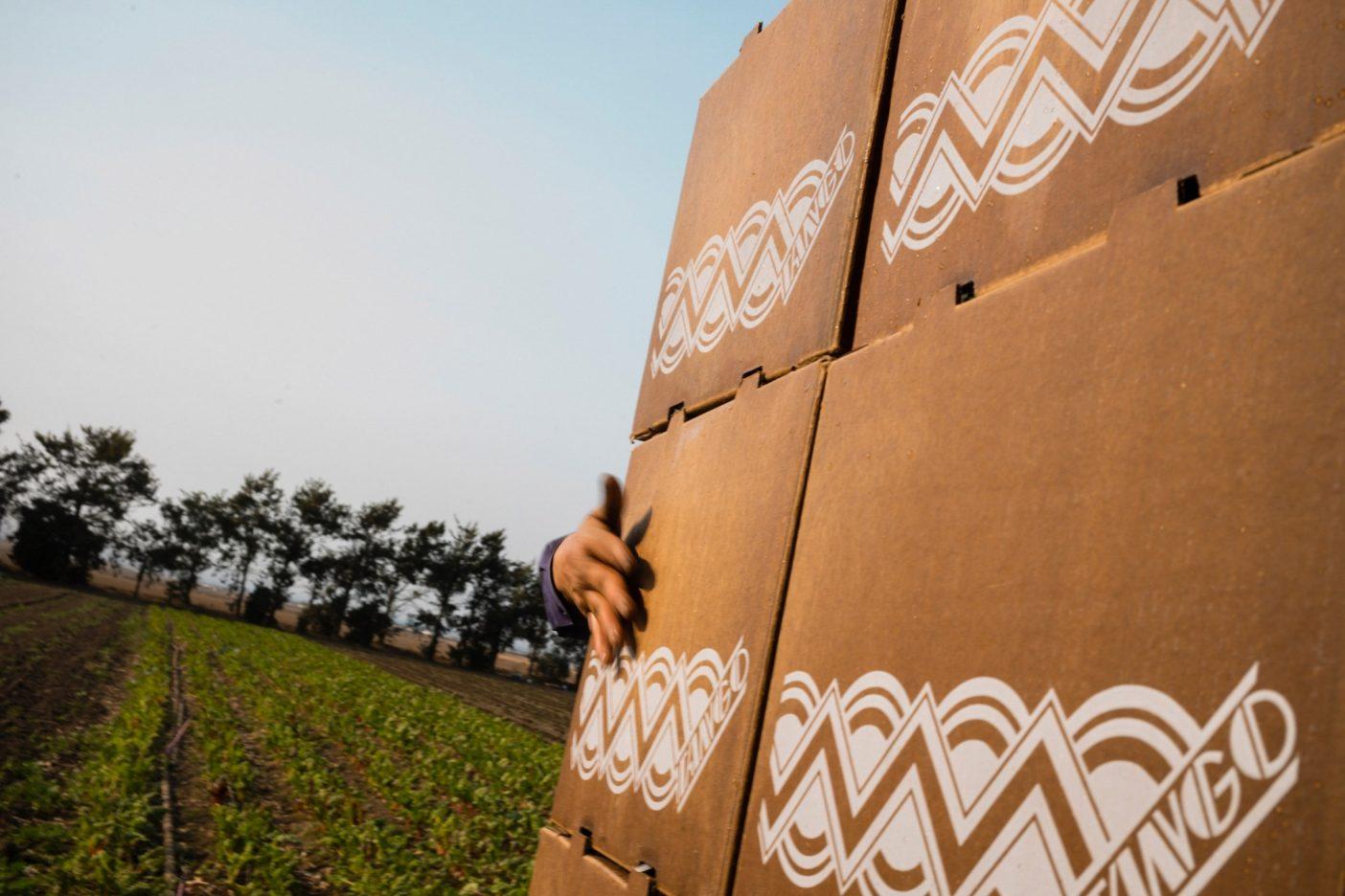 カリフォルニア州サリナスのALBA本社でトラックに荷を積む労働者。