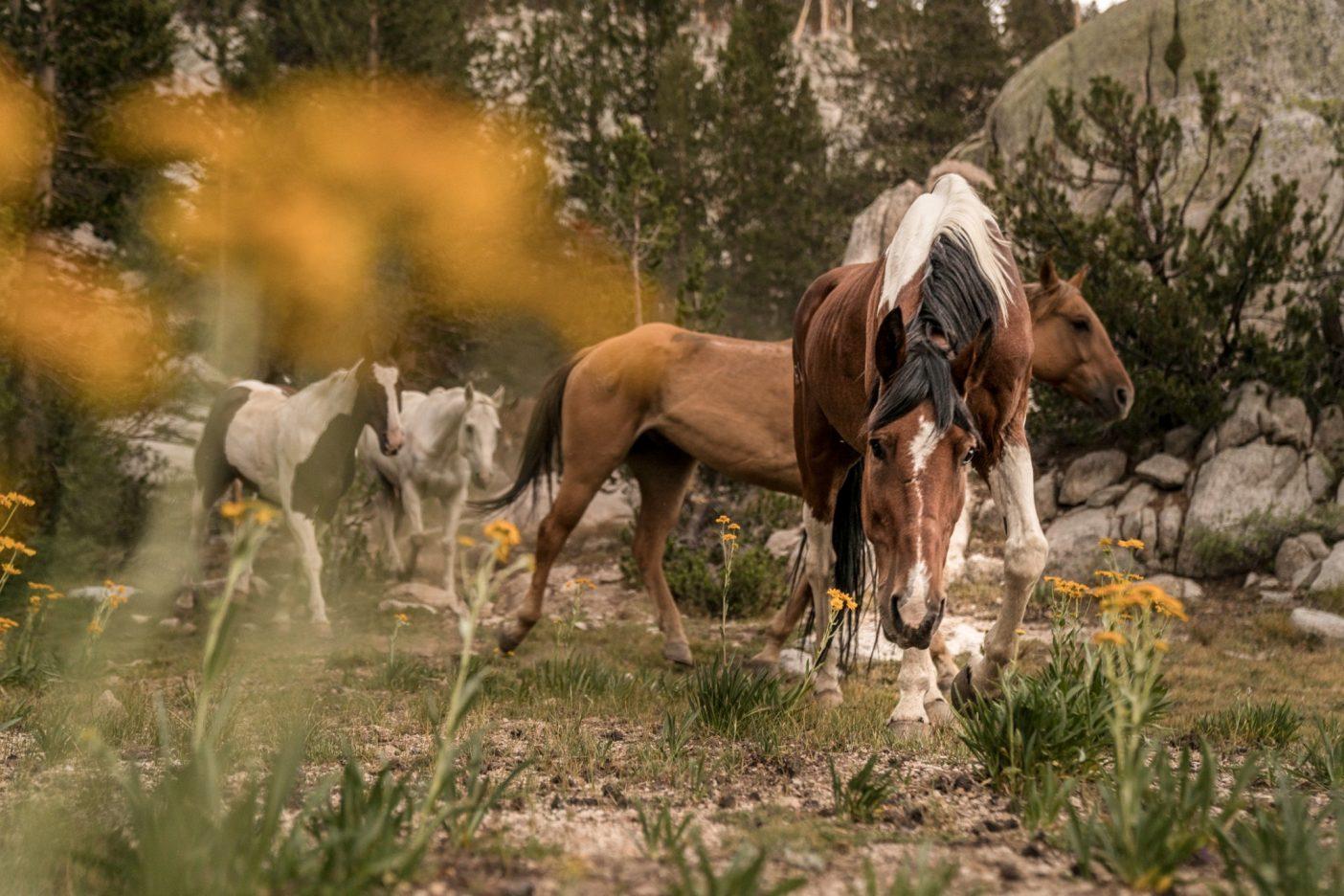 (左から)ペソス、ガペル、ブラッド、トビーは、花崗岩の崖に近い草地で食事をする。Photo:Taylor Rees