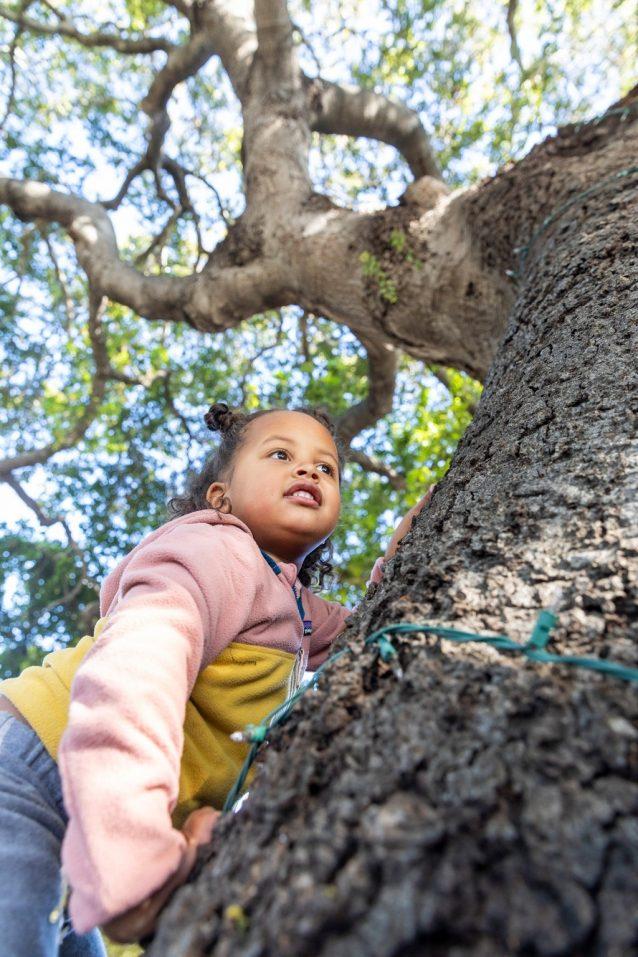 サンタバーバラで、アッシュとクリスティン、2人の母に見守られてクエストは木登りをする。photo : Keri Oberly