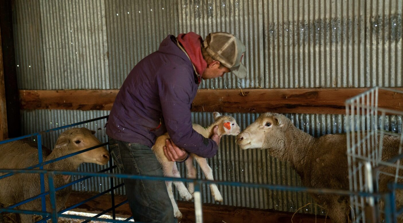 スカイパイロット農場で子羊を抱えるジョシュ・ワートン。コロラド州ロングモント。Photo: James Lucas
