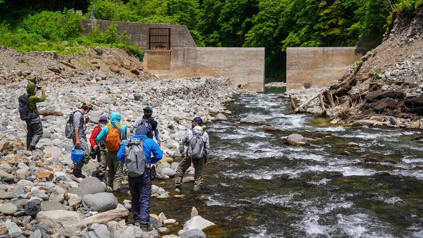 生きものたちの大切な通り道として機能するスリット。たったこれだけの処理で、河川を囲む生態系は劇的に変化する。写真:奥本 昌夫