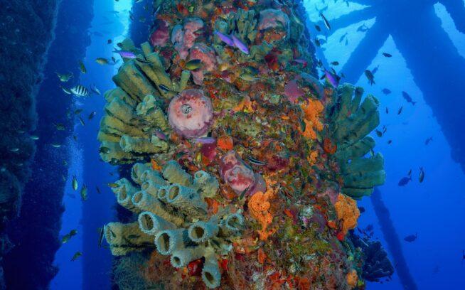 テキサス州沖フラワーガーデン・バンク米国海洋保護区内の稼働を停止したガス・プラットフォーム。Photo : Jesse Cancelmo