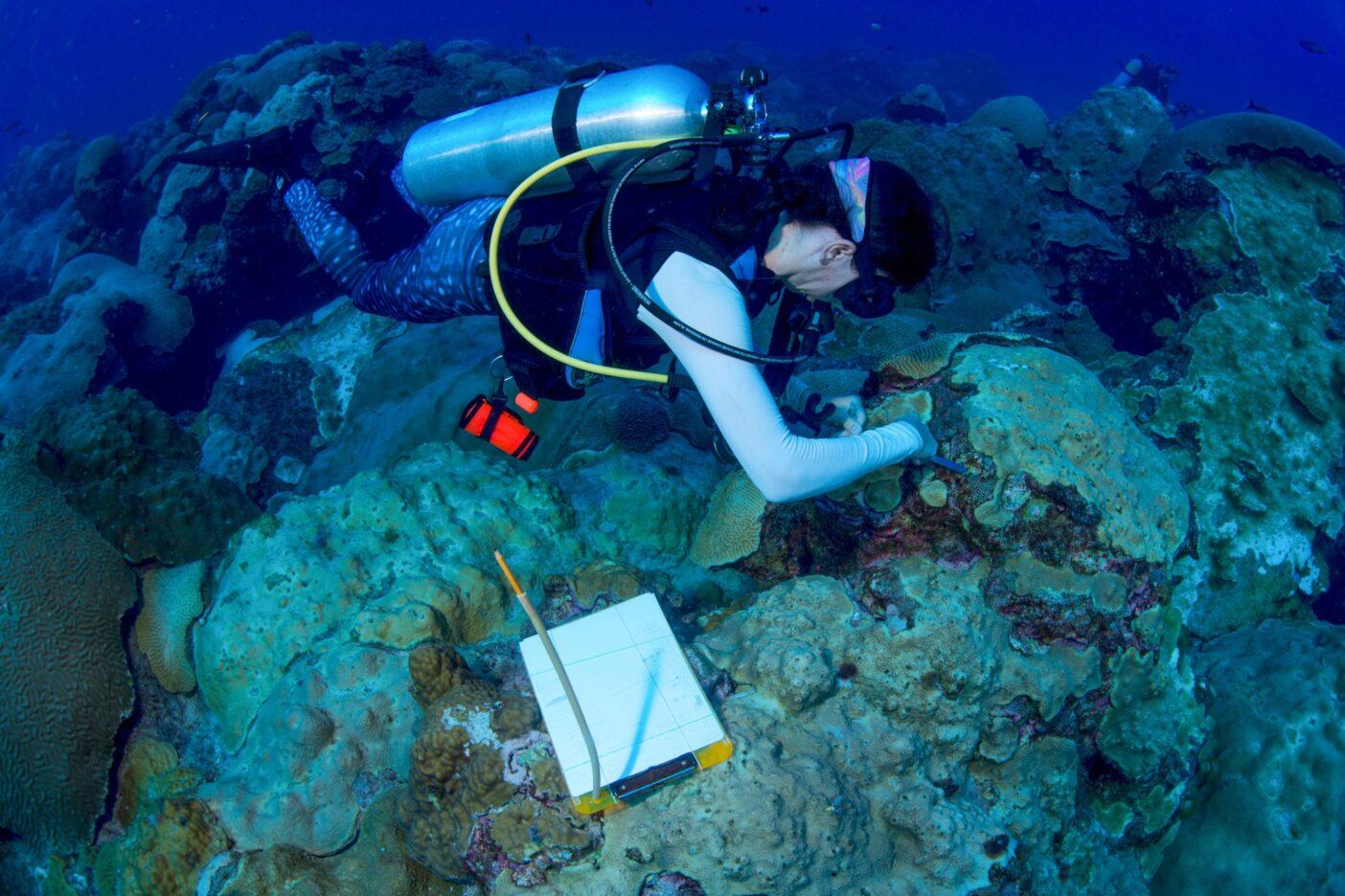 海洋生物学者は東部フラワーガーデン・バンクでサンゴの健康状態を調査する。Photo : Jesse Cancelmo