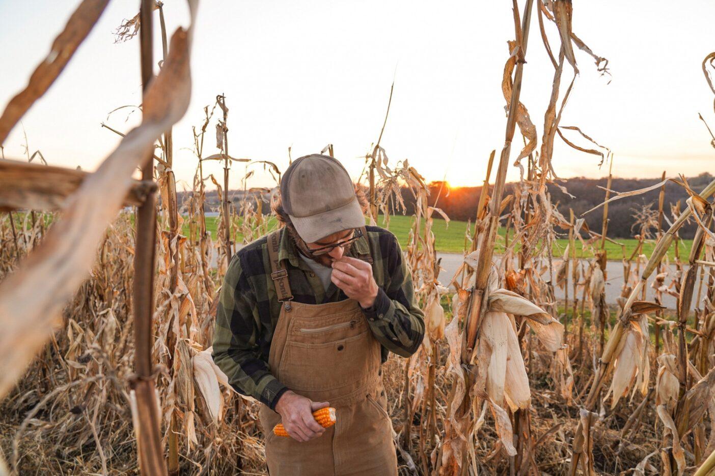 ジョンは来年の種として取っておく自然受粉したトウモロコシを選別する。Photo: Jesse Perkins