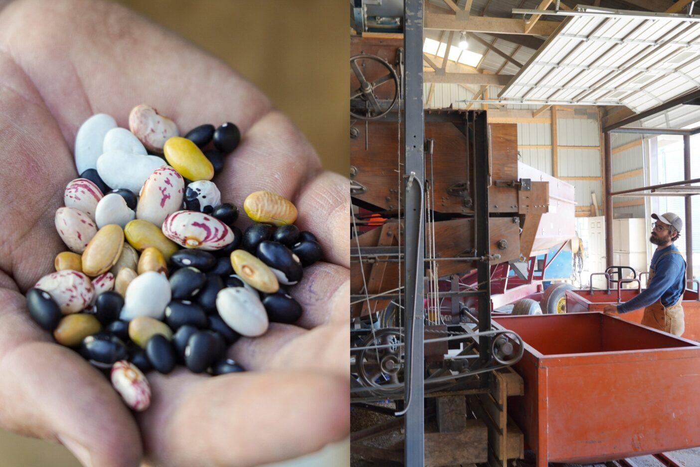 左:「穀類と豆類を並行して蒔けば、土がむき出しになることはほとんどないから、おそらく4年間は耕さずに済むわ。」ハリー・ウェプキングは言う。右:ジョンはメドウラーク・オーガニックスで育てた穀物をきれいにする。ウェプキング夫妻は、自家製粉機を導入し、地域の製粉拠点としての機能を備えた施設を整えることで、地元農家に商品取引システム以外の道を提供している。Photo: Jesse Perkins