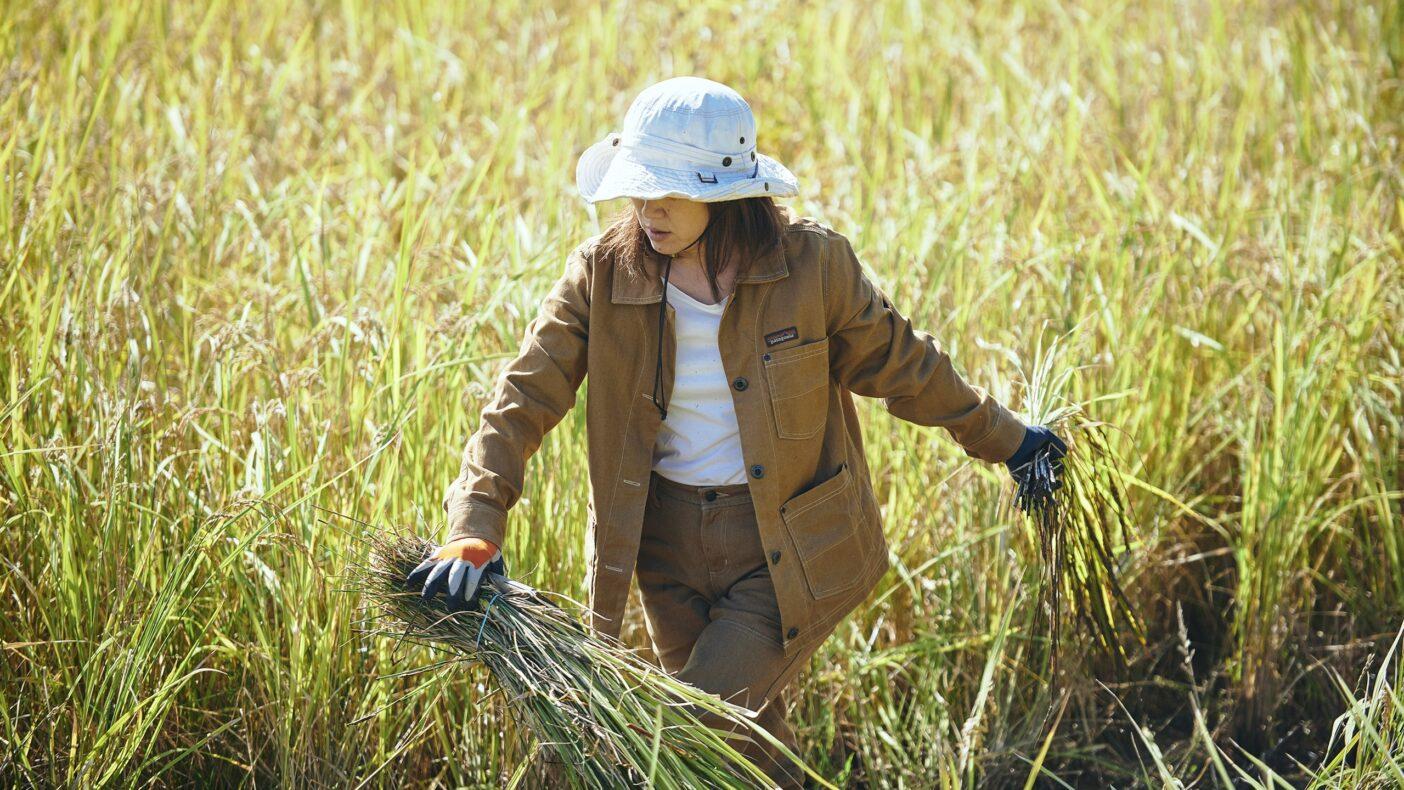 株式会社 坪口農事未来研究所:コウノトリが舞う自然豊かな兵庫県の北部、豊岡市で「コウノトリ育む農法」等の有機農法を通じて環境と食の安心・安全を最優先に、私たち農業者や地域の未来がどうあるべきかを考える農業法人。写真:飯坂 大