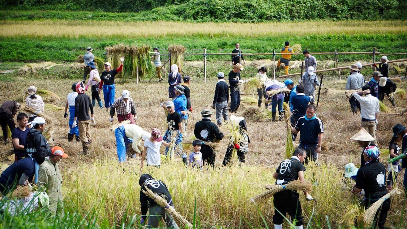 有限会社 仁井田本家:「日本の田んぼを守る酒蔵」を使命とし、自然栽培稲作を行う。いずれは地元の田を全て自然栽培にすべく田んぼのがっこうを主宰。地元~外国の方までが米作りを学ぶ田では、野生の鴨たちが子育てをする。写真:仁井田本家