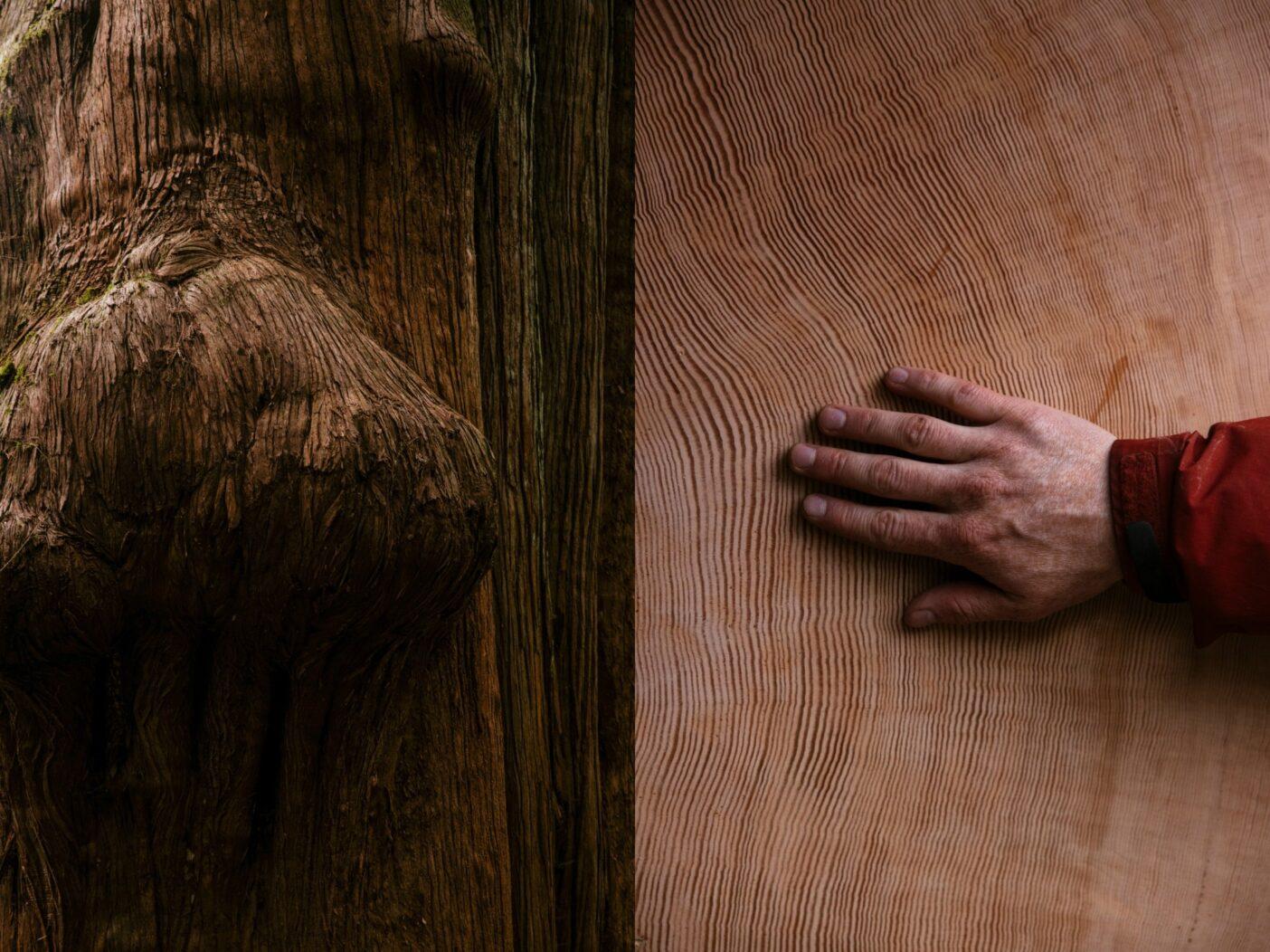 左:古木の側面にコブが形成されている。なぜ一部の木にこうした丸い突起ができるのか、科学者にもまだ分からないが、こうしたコブが木の健康と無関係であることは確認されている。写真家にとっては、おもしろい構図だ。 右:このベイスギの原生林の1つの年輪は1年に相当する。ワットは全部数えたことはないが、写真の部分だけでも、この木が数世紀にわたって生きていたことが分かる。Photos: Jeremy Koreski