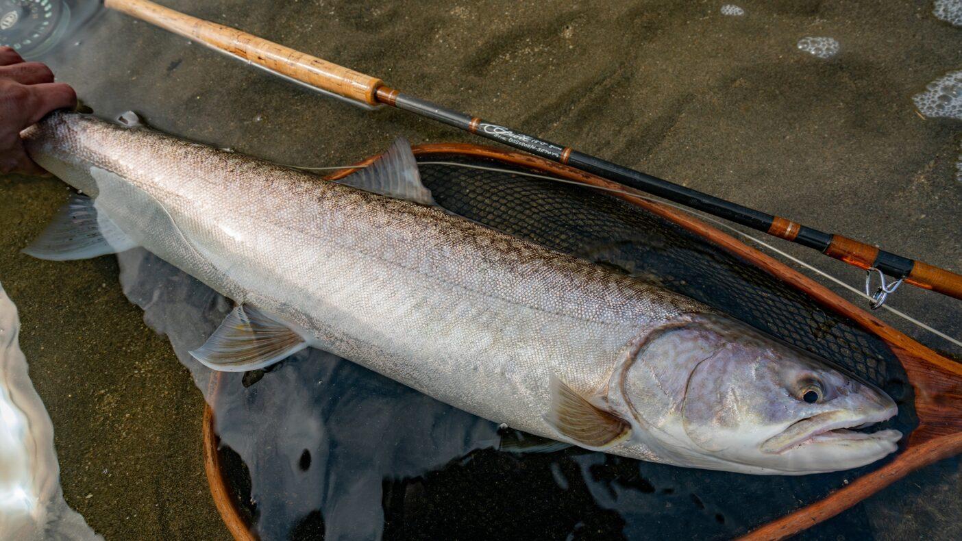 汽水の主のような長大なアメマス。先住民アイヌに『トゥクシ』と呼ばれた北海道のネイティブトラウト。写真:奥本 昌夫