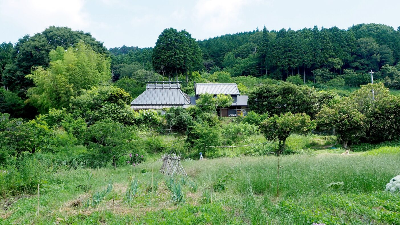 不耕起草生栽培で維持されている松沢 正満さん(愛知県新城市)の福津農場。30年以上、有機で不耕起草生を行ってきた。ご自宅のまわりに果樹、畑、水田、鶏舎があり、地面はすべて植物で覆われ、美しい調和を見せている。写真:金子 信博