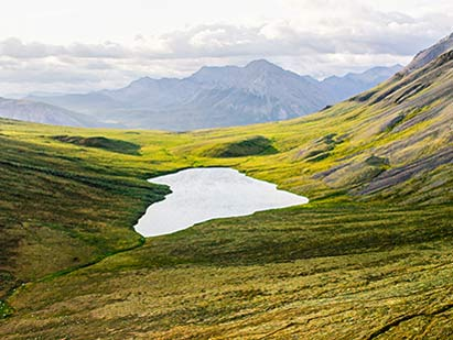 The Arctic Refuge